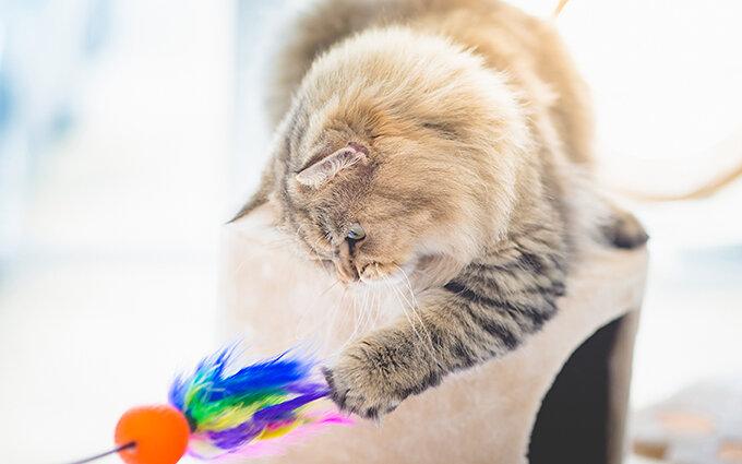 猫のおもちゃおすすめ18選|キャットケアスペシャリストによるランキング付き!