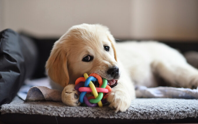 犬のおもちゃおすすめ15選|専門家が選んだボールやぬいぐるみ知育玩具も紹介