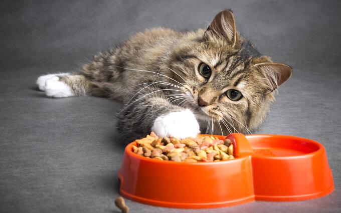 シニア猫用キャットフードおすすめ19選【獣医師監修】高齢猫が本当に必要な食事とは?