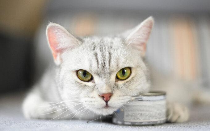 オーガニックキャットフードおすすめ15選【獣医師監修】愛猫の安全と健康のために