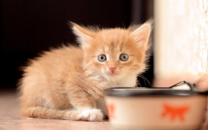 子猫用離乳食おすすめ16選【獣医師監修】生後2ヶ月からのキャットフード